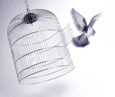 Caged Bird's Song